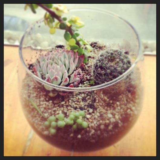 How to make mini cacti garden