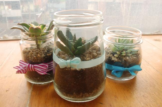 Mini cactus jam jars